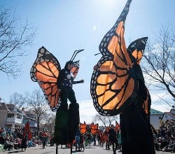 mayday butterflies by bruce silcox