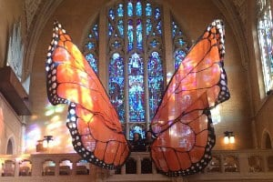 Large Monarch butterfly wings in a church