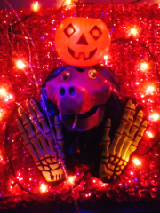 spooky pumpkin party!